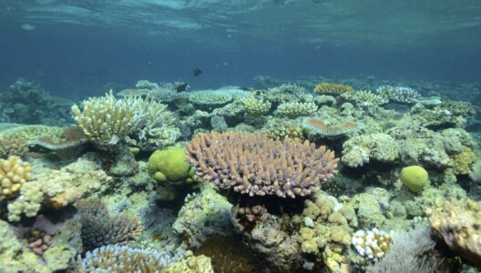 Underwater image of the Great Barrier Reef and coral reef