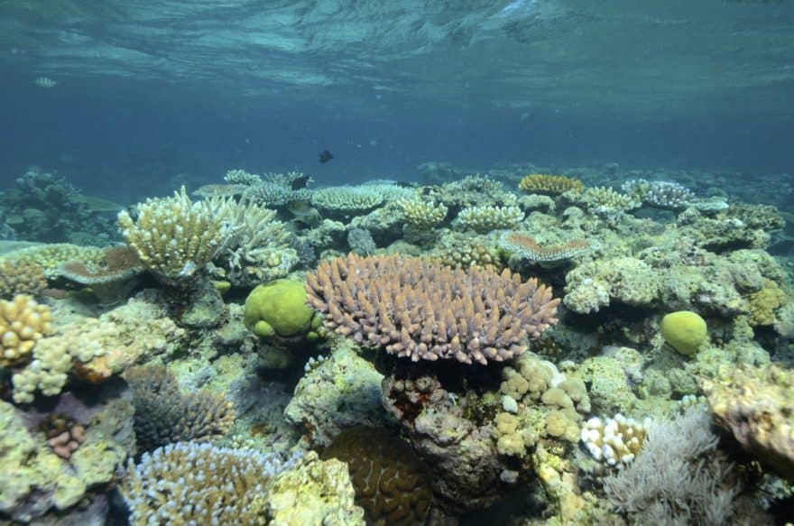 Facts about Coral Bleaching