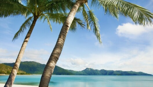 Whitsunday Coast Hideaway Bay beach and palm trees
