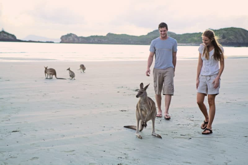 Whitsunday Coast Kangaroos