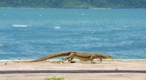 Grassy Island - Tourism Events Queensland