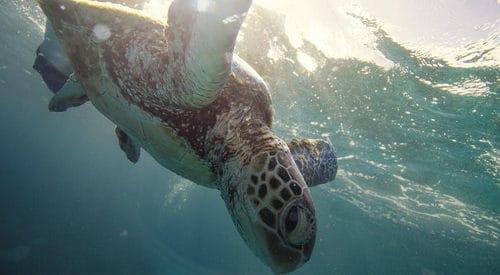 Turtle Whitsundays - Tourism Events QUeenslands