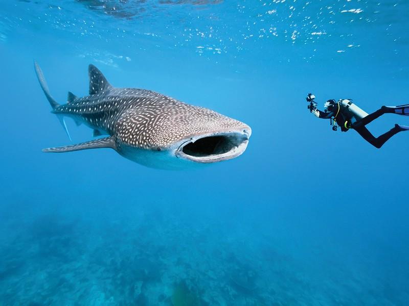 Swim with Whale Sharks