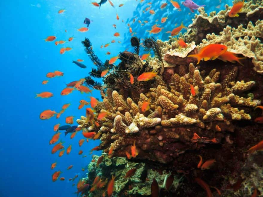 colourful fish and coral reef on the Great Barrier Reef