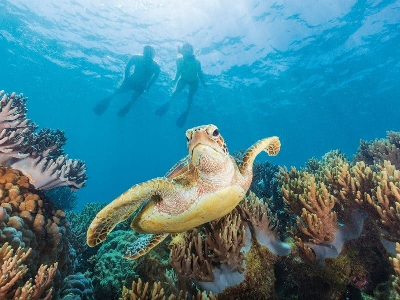 Turtle underwater with coral reef and two people snorkelling above