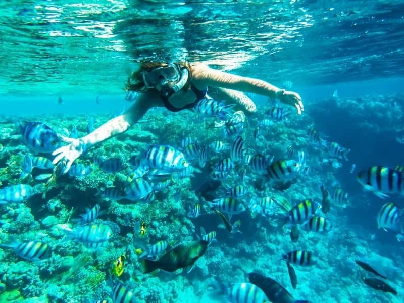 A woman snorkeling with tropical fish and coral reef on the Great Barrier Reef