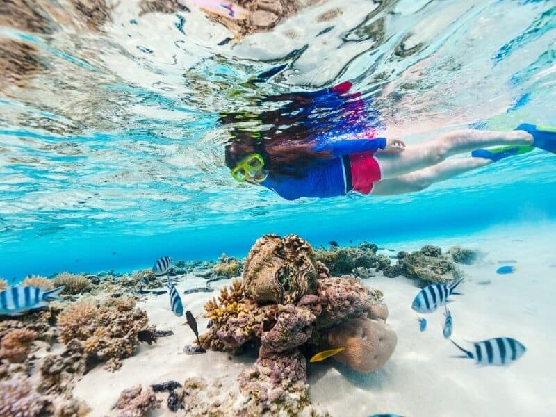 A woman snorkelling on the fringing Great Barrier Reef near the Whitsunday Islands