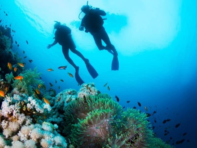 Two people diving on the great barrier reef