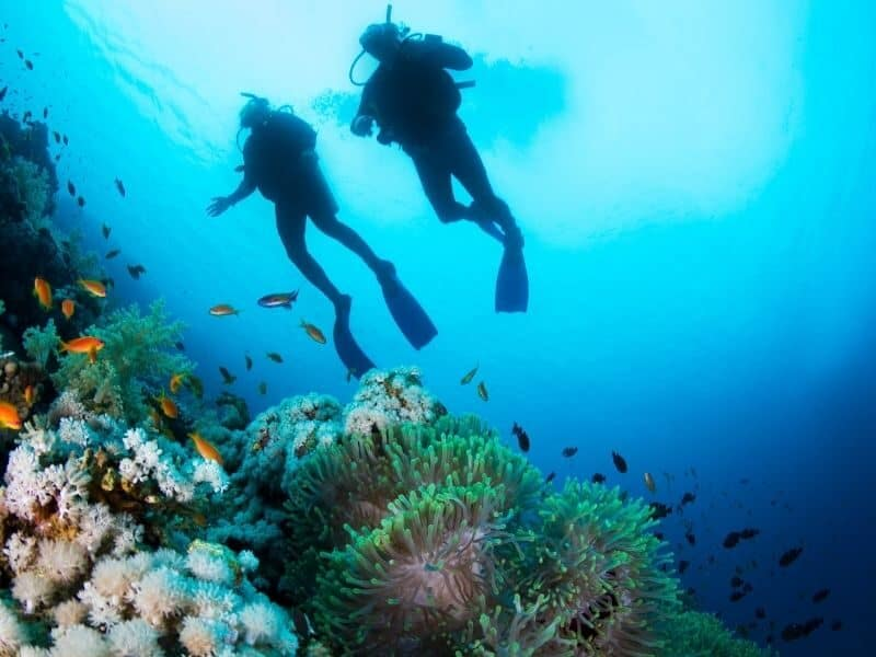 Two people scuba diving on the Great Barrier Reef